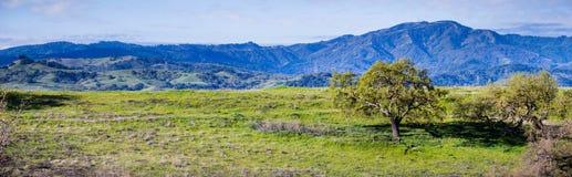 Free Green Hills In South San Francisco Bay Area, Santa Cruz Mountains In The Background, San Jose, California Stock Photography - 135817542