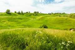 Green hills in June. Green hills and wild flowers in the beginning of summer Royalty Free Stock Photo