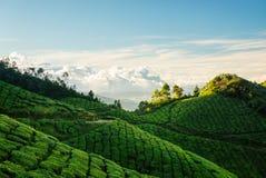 Green hills of Kolukkumalai tea plantations in Munnar Royalty Free Stock Image