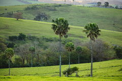 Green hills landscape tropical area Royalty Free Stock Images