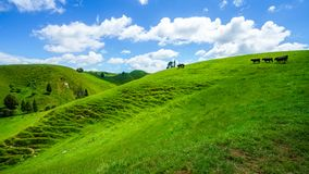 On the road, forgotten world highway, new zealand 8. Green hills, lush grass, blue sky with white clouds. on the road, forgotten world highway, new zealand stock images