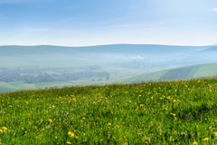 Green hills and meadow, wild flowers, countryside Stock Photography