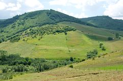 Green hills and meadows of the Pester Plateau in Serbia Stock Images