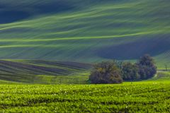 Green hills of Moravia. Czech Republic stock photography