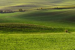 Green hills of Moravia Royalty Free Stock Photo