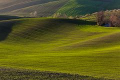 Green hills of Moravia. Czech Republic royalty free stock image