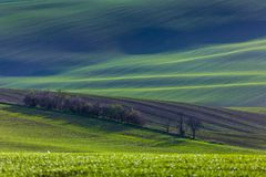 Green hills of Moravia stock photo