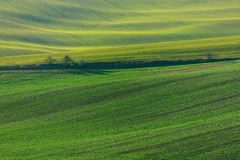 Green hills of Moravia royalty free stock photos