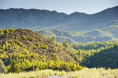 Green Hills of mountains in the background. Stock Photography
