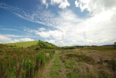 Green hills near Matakana Royalty Free Stock Photography