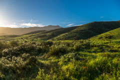 Green Hills After the Rain. Green hills and meadows in the Santa Monica mountains following winter rains Stock Image