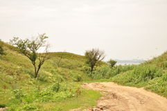 Green hills road to the sea Royalty Free Stock Photography
