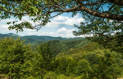 Green hills during the sunny day with blue sky and white clouds. With large bough of a tree Royalty Free Stock Image