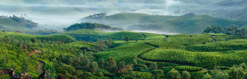 Green hills of tea plantations in Munnar. Munnar tea plantations with fog in early morning at sunrise. Kerala, India stock photography