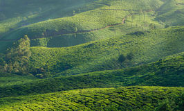 Green hills of tea plantations in Munnar Royalty Free Stock Photography