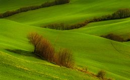 Green hills and trees background. Green fields over the hills with small trees stock photo