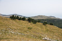 Green hills with trees Royalty Free Stock Photos