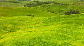 Green hills of Tuscany, Royalty Free Stock Photography