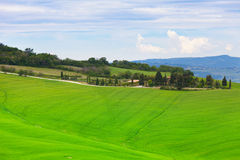 Green hills of Tuscany Stock Images