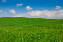 Green Hills of Val d'Orcia in Tuscany Royalty Free Stock Photography