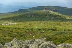 Green hills of Vitosha Mountain near Cherni Vrah Peak, Sofia City Region, Bulgaria. Beautiful green hills of Vitosha Mountain near Cherni Vrah Peak, Sofia City royalty free stock image