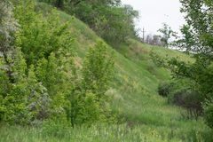 Green hills and wild flowers in the beginning of summer Royalty Free Stock Photo