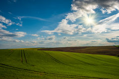 Green hills with young wheat Royalty Free Stock Images