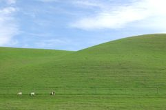 Green hillside Stock Photos