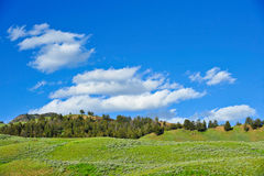 Green hillside and blue sky Royalty Free Stock Images
