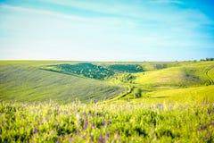 Green hilly  Ukrainian landscape on sunny day Stock Image