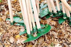 Green Hoes. And fallen leaves on the ground Royalty Free Stock Images