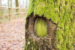 Free Green Hole In The Tree Royalty Free Stock Image - 38600516