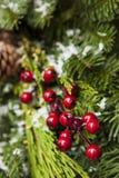 Green Holiday Christmas Decoration Royalty Free Stock Photo