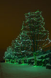 Green Holiday Lights on Trees Stock Images
