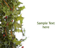 Green holly border Stock Photography
