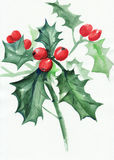 Green holly branch with berries Royalty Free Stock Image