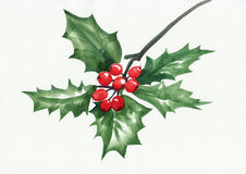 Green holly branch Stock Photography