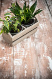 Green home garden plants in wooden box Stock Image