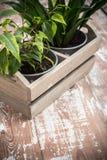 Green home garden plants in wooden box Stock Photos