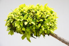 Green home plant Royalty Free Stock Image
