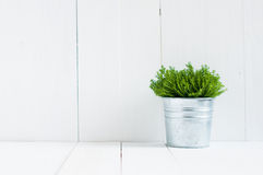 Green home plant Royalty Free Stock Photo