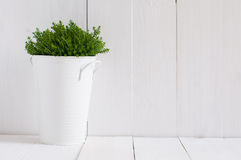 Green home plant Stock Images