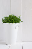 Green home plant Royalty Free Stock Photos