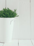 Green home plant Stock Image