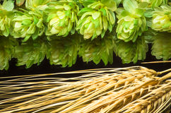 Green hop cones and ears of wheat. agricultural Royalty Free Stock Photography