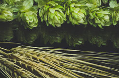 Green hop cones and ears of wheat. Blue toned Stock Photo