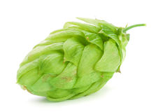 Green hop plant Royalty Free Stock Images