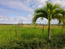 Green is hope. Lovely picture taken to the outdoors of a village at Guerra, located in the Dominican Republic, Santo Domingo. 05/01/2017 royalty free stock image