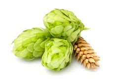 Green Hops, Ears Of Barley And Wheat Grain.