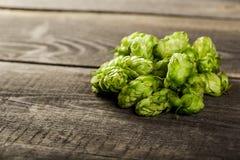 Green hops Royalty Free Stock Image